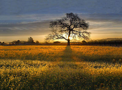 Sun Rise Oak In Yellow Mustard Art Print