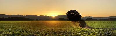 Mighty Oak Photograph - Sun Rise Sonoma by Stan Angel