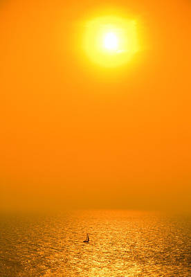 Photograph - Sun Sailing by Alexey Stiop