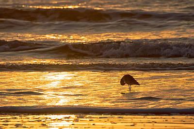 Photograph - Sun Salutation by Mary Lee Dereske