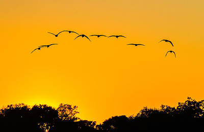 Animals Royalty-Free and Rights-Managed Images - Sun Set Ibis by Jeff Donald