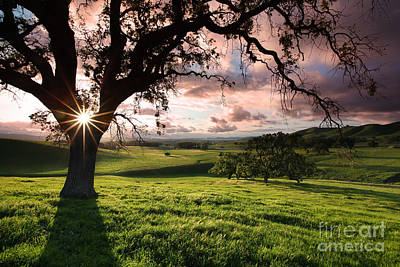 Sun Setting Over The Meadows Mt Diablo State Park California 2014 Art Print by Benjamin Race - Arc of Light Photography