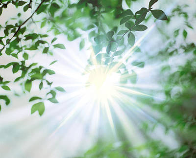 Altered Photograph - Sun Shining Through Leaves, Lens Flare by Panoramic Images