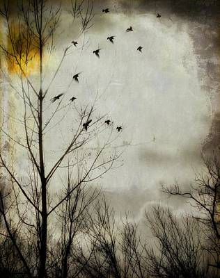 Flock Of Bird Photograph - The Sun Splashed Unto A Gray Day by Gothicrow Images