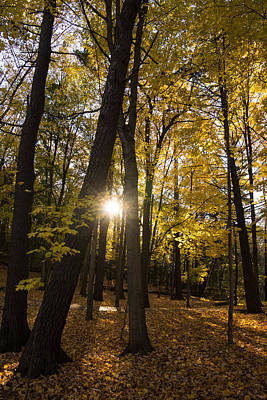 Sun Spotting Autumn - A Peaceful Forest In The Fall Art Print