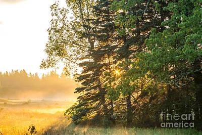 Photograph - Sun Streams by Susan Cole Kelly
