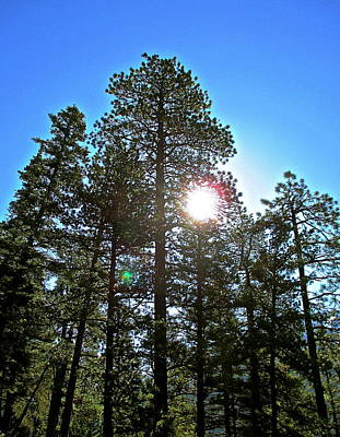 Photograph - Sun Through Tall Trees by Jeff Gater