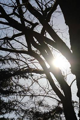 Photograph - Sun Through The Trees by Denise Cicchella