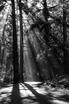 Photograph - Sun Through The Trees by Robert Woodward