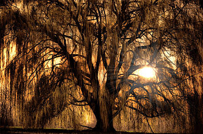 Willow Trees Photograph - Sun Through The Willow by Emily Stauring
