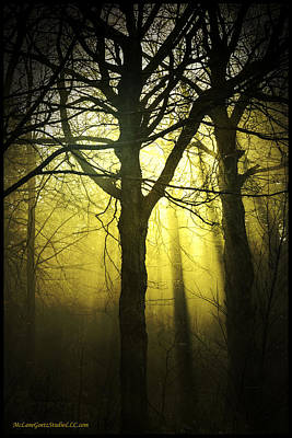 Harvest Photograph - Sun Thru The Foggy Path by LeeAnn McLaneGoetz McLaneGoetzStudioLLCcom