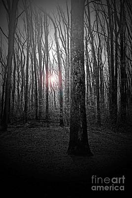 Pennypack Photograph - Sun Thru The Trees At Twilight by Tom Gari Gallery-Three-Photography
