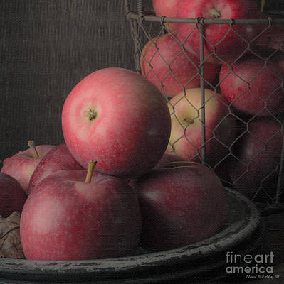 Food And Beverage Royalty-Free and Rights-Managed Images - Sun Warmed Apples Still Life Square by Edward Fielding