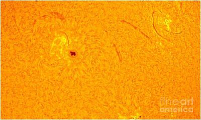 Sun With Sunspots 1710 & 1711, 2013 Art Print