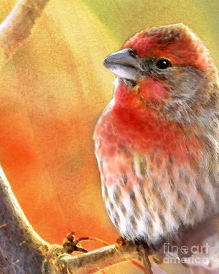 Finch Digital Art - Sun Worshiper by Betty LaRue