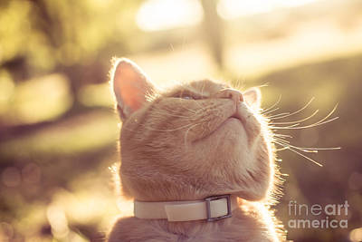 Photograph - Sun Worshipper by Julie Clements