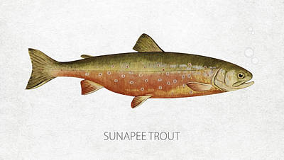 Sunapee Trout Art Print by Aged Pixel