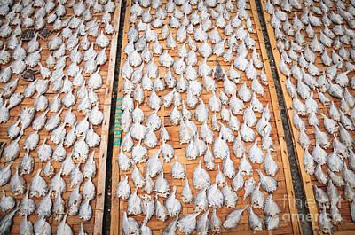 Jawa Photograph - Drying Fish  by Danu Primanto