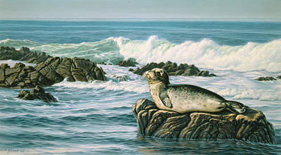 Seals Painting - Sunbather  by Paul Krapf