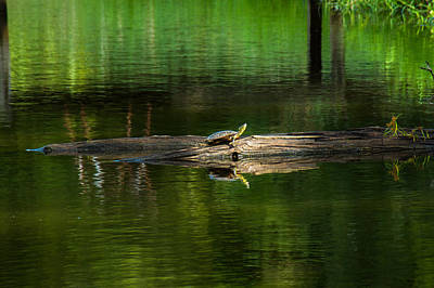 Photograph - Sunbather's Spot by Bill Pevlor