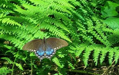 Photograph - Sunbathing Butterfly by Diane Mitchell