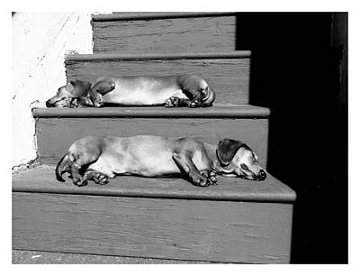 Sunbathing Dachshunds Art Print