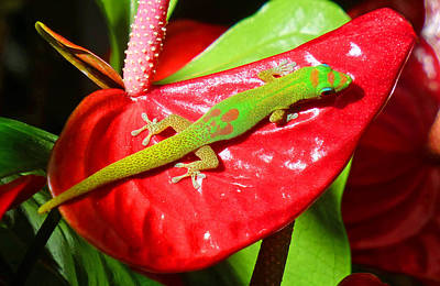 Anthurium Photograph - Sunbathing Gecko by Lori Seaman