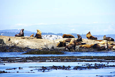 Photograph - Sunbathing On The Rocks by Marilyn Wilson
