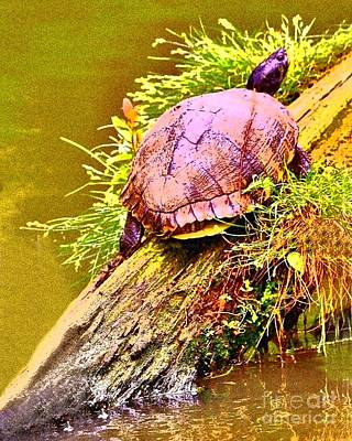 Photograph - Sunbathing - Turtle On A Log by Shelia Kempf