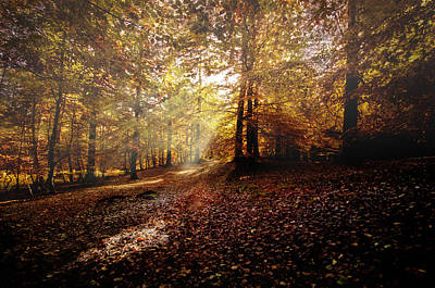 Photograph - Sunbeam In The Forest by Henrik Petersen