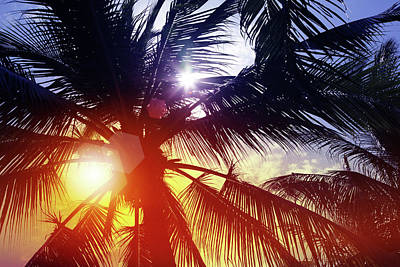 Photograph - Sunbeam Through Palm Tree In Summer by Blackred
