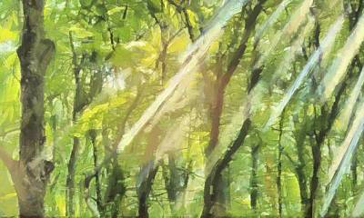 Sunbeams In The Forest Print by Dan Sproul