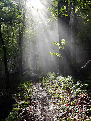 Photograph - Sunbeams On The Appalachian Trail by Glenn Gordon