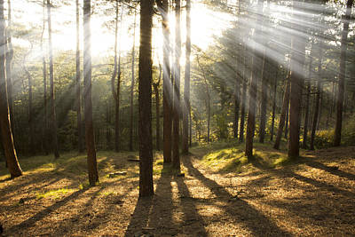 Sunbeams Through The Trees Art Print by Paul Madden