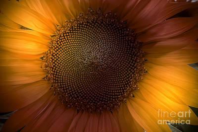 Sunblast Art Print by Marco Crupi