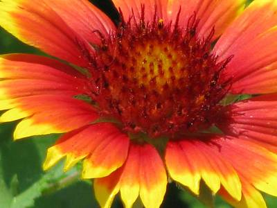 Photograph - Sunburst 06 by Pamela Critchlow
