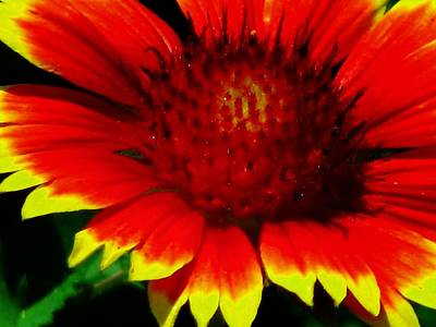 Photograph - Sunburst 14 by Pamela Critchlow