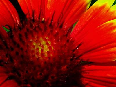 Photograph - Sunburst 15 by Pamela Critchlow