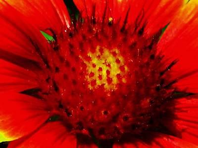 Photograph - Sunburst 16 by Pamela Critchlow