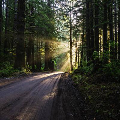 Sunburst At Redwood National Park Original by Vishwanath Bhat