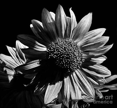 Photograph - Sunburst Bw by Chalet Roome-Rigdon
