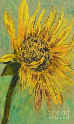 Sunflowers Drawings - Sunburst by Cori Solomon