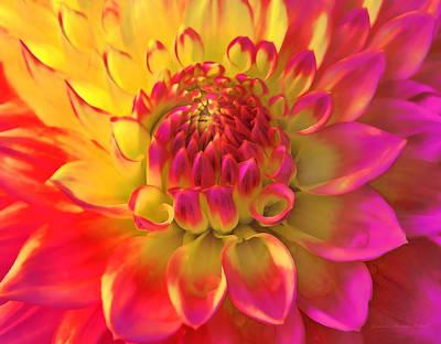 Photograph - Sunburst Dahlia Flower by Jennie Marie Schell