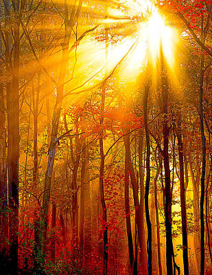 Sunburst In The Forest Art Print by Randall Branham