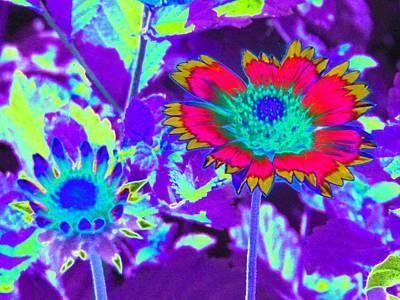 Photograph - Sunburst - Photopower 2243 by Pamela Critchlow