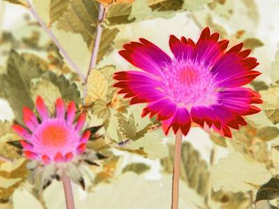 Photograph - Sunburst - Photopower 2251 by Pamela Critchlow