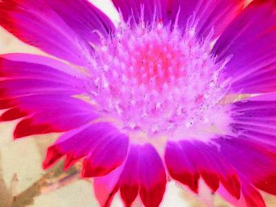 Photograph - Sunburst - Photopower 2253 by Pamela Critchlow