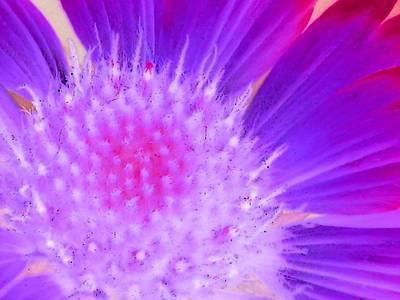 Photograph - Sunburst - Photopower 2254 by Pamela Critchlow