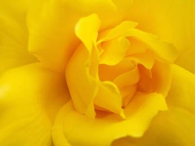 Photograph - Sunburst Rose Flower by Jennie Marie Schell