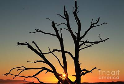 Photograph - Sunburst Silhouette by Adam Jewell